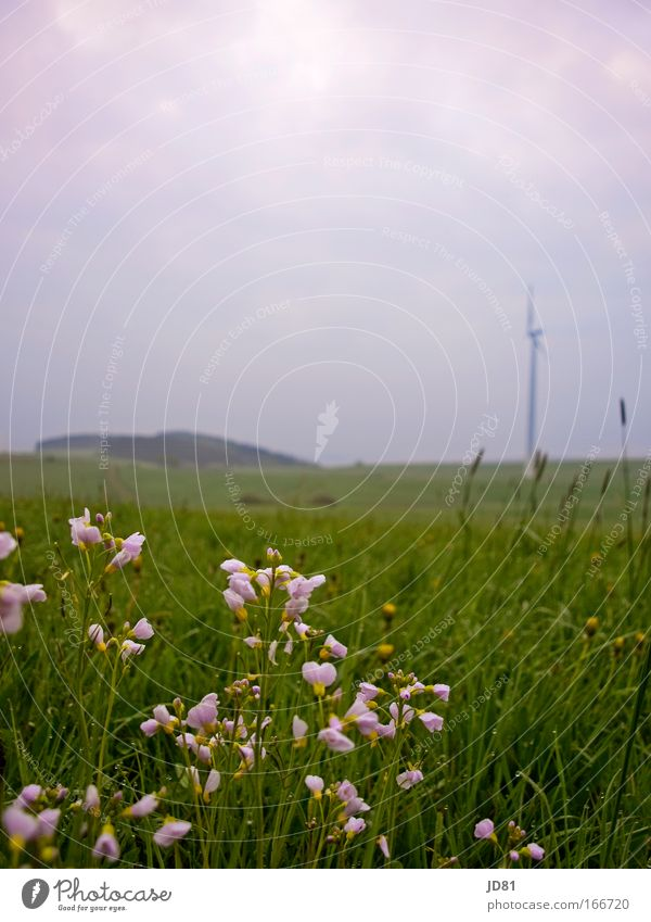 Nature Plant Flower Blossom Grass Landscape Spring Environment Moody Weather Field Blue sky Spring fever Rhineland-Palatinate Love of nature Eifel