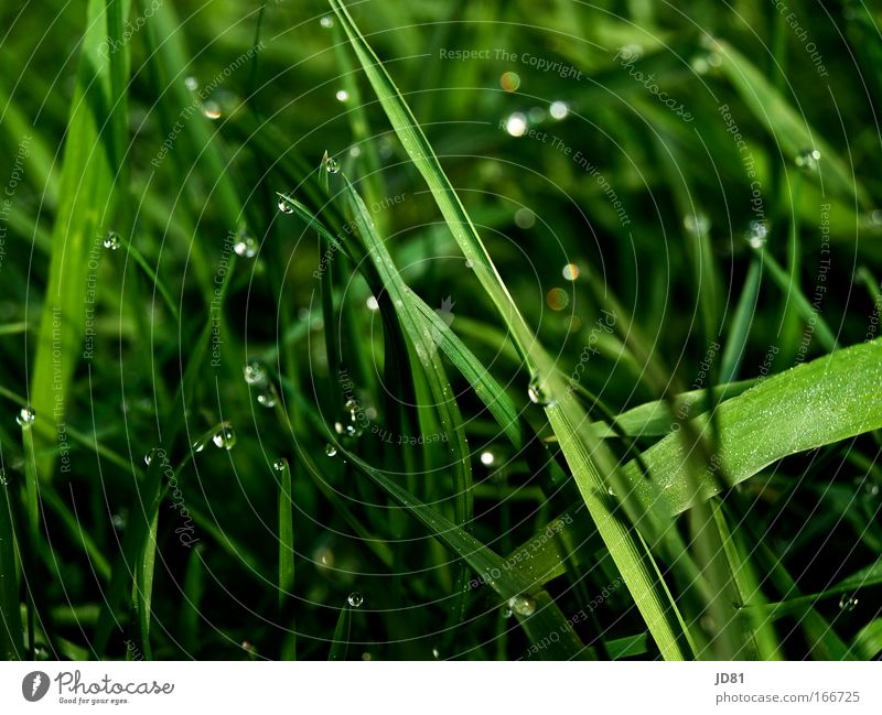 Plant Life Grass Spring Glittering Elegant Esthetic Green Dew Meadow Close-up Highlight Grass green Glitzy Grass meadow