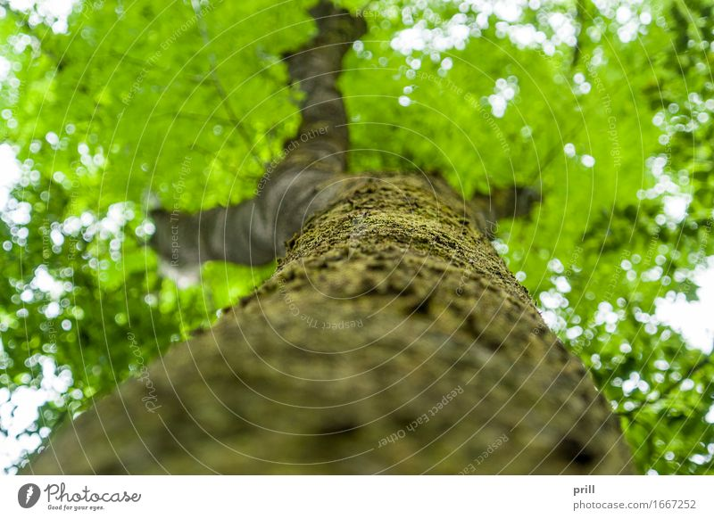 bottom up tree Nature Plant Spring Tree Moss Leaf Forest Wood Under Green flat angle trunk Tree trunk Tree bark Crust Branch Twig sharpness of image Ground