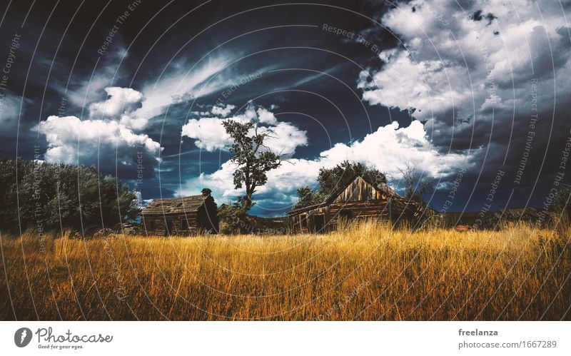 Stormy hut Landscape Sky Clouds Storm clouds Autumn Grass Meadow Field Deserted Hut Roof Wood Blue Brown Yellow Gold Adventure Tree Colour photo Exterior shot