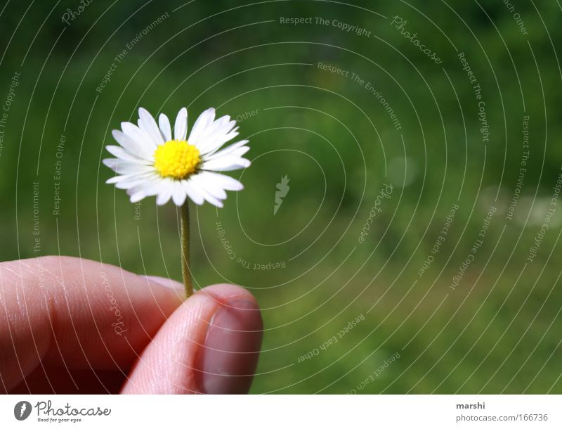 A flower for you Colour photo Exterior shot Shallow depth of field Leisure and hobbies Fingers Nature Plant Flower Grass Meadow Fragrance Beautiful Emotions Joy