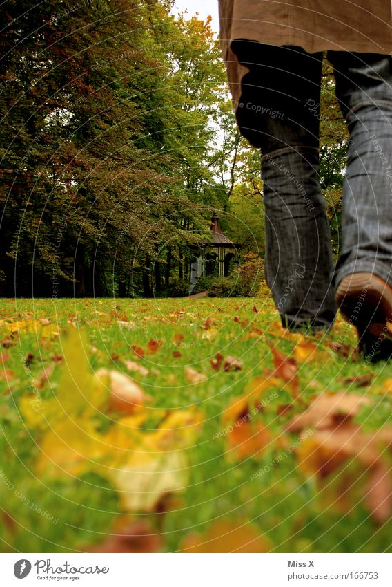 love is gone Colour photo Exterior shot Rear view Masculine Man Adults Legs Feet 1 Human being Nature Autumn Bad weather Grass Leaf Park Meadow Forest Jeans