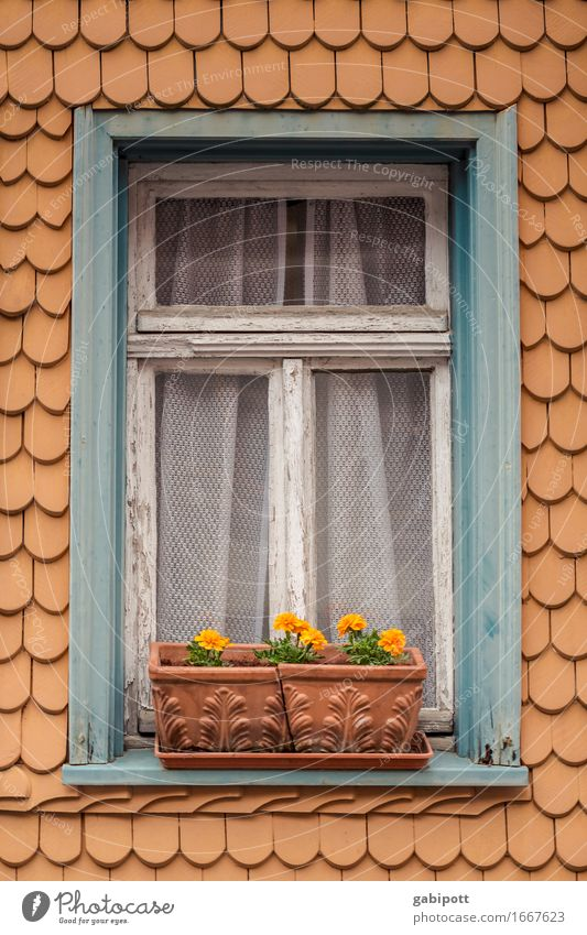 City Old Blue Summer Flower House (Residential Structure) Window Lifestyle Garden Brown Facade Flat (apartment) Orange Living or residing Idyll Blossoming