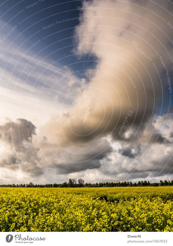 storm front Environment Landscape Sky Clouds Storm clouds Spring Climate Weather Beautiful weather Plant Bushes Agricultural crop Field Blue Yellow White Canola