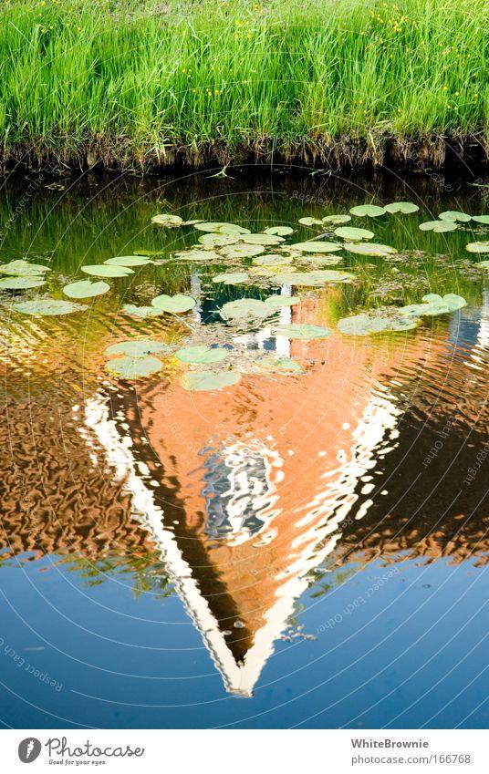 Nature Water Plant Grass Lake Beautiful weather River bank Homesickness