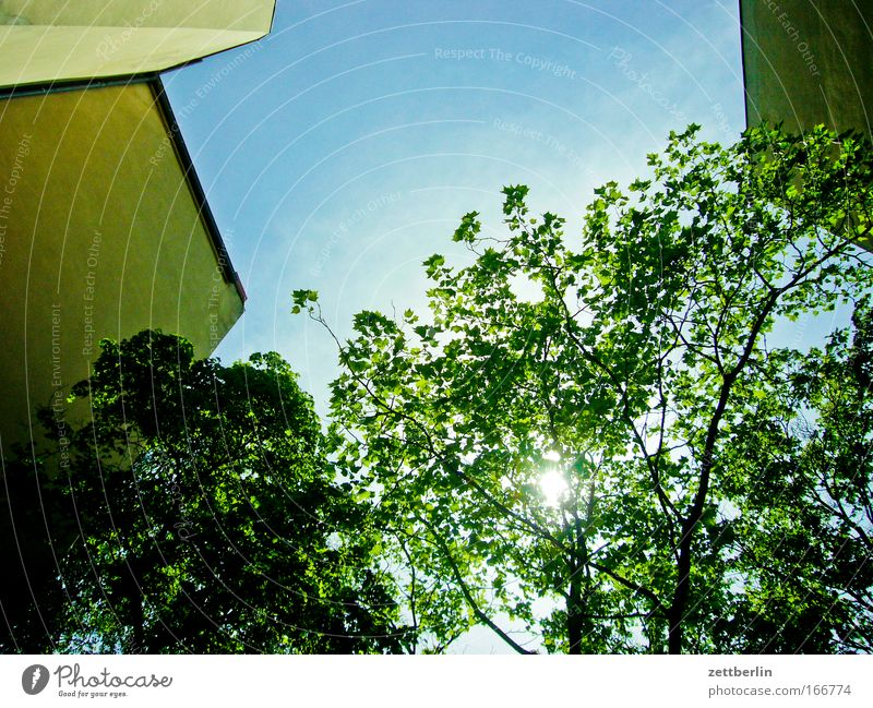 Sky Tree Sun Green Plant Summer Leaf House (Residential Structure) Clouds Wall (barrier) Building Backyard Behind Tenant Town house (City: Block of flats) Oxygen