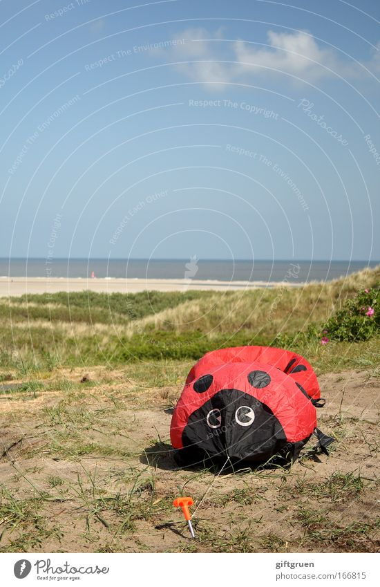 invasion of the giant ladybirds Colour photo Exterior shot Copy Space top Day Landscape Sky Climate change Coast Large Attack Robbery Ladybird Beetle Monster