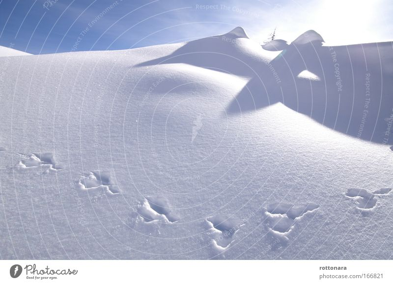 Sky Nature White Winter Animal Cold Snow Mountain Ice Time Going Large Adventure Frost Hill Alps