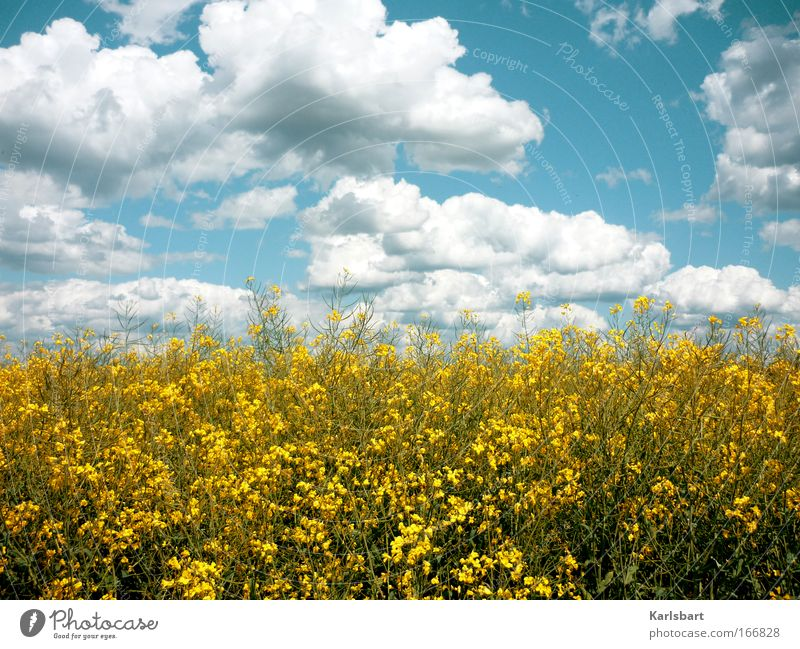 Sky Nature Beautiful Vacation & Travel Plant Summer Clouds Environment Landscape Happy Healthy Field Energy industry Hiking Climate Trip
