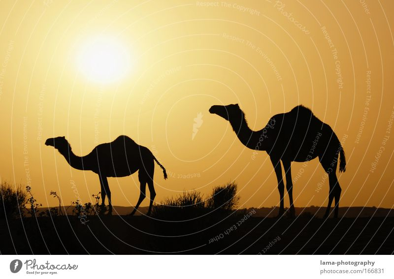 Vacation & Travel Summer Sun Calm Landscape Animal Far-off places Warmth Pair of animals Wild animal Large Tourism In pairs Adventure Romance Sunset