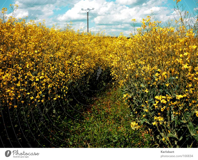 Sky Nature Plant Summer Calm Clouds Yellow Freedom Blossom Landscape Lanes & trails Environment Power Field Large Energy