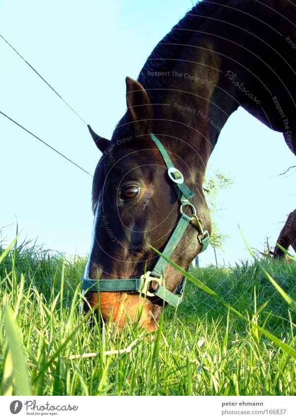 Nature Blue Green Beautiful Animal Calm Nutrition Happy Brown Contentment Glittering Natural Large Fresh Growth Horse