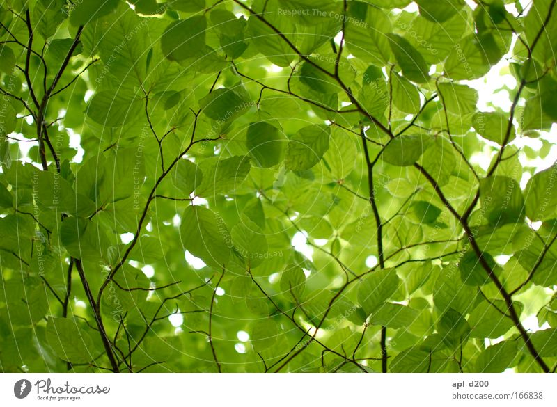 Sky Nature Green Beautiful Leaf Black Warmth Spring Brown Fresh Hiking Esthetic Sustainability Wild plant