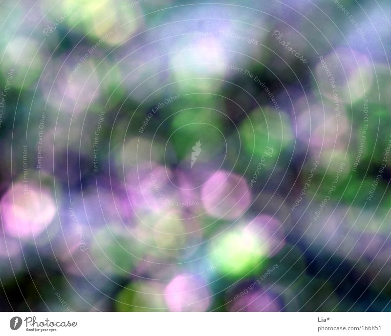 Green Blue Summer Spring Dream Happiness Violet Unclear Point of light Lens flare Play of colours Dream world Glare effect