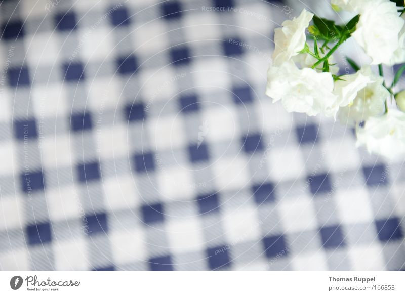 check flowers Colour photo Deserted Copy Space left Bird's-eye view Plant Flower Blossom Foliage plant Pot plant Blue Green White Pattern Checkered Tablecloth