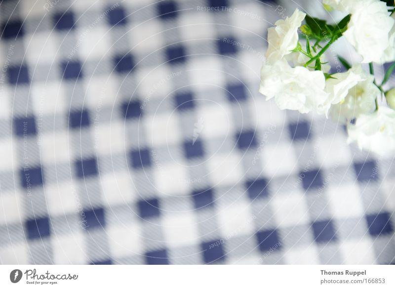 White Flower Green Blue Plant Blossom Checkered Foliage plant Pot plant
