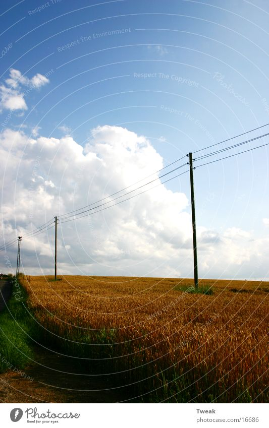 on the stromautobahn Field Clouds Pole Cable Grain Blue sky