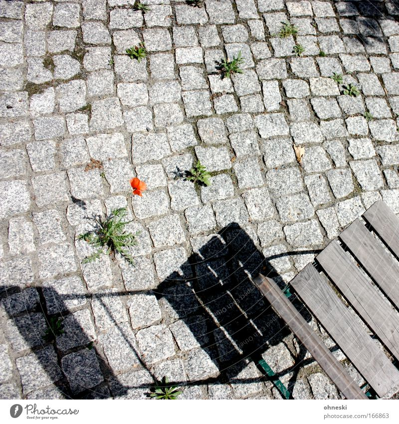 hope Colour photo Exterior shot Copy Space top Copy Space middle Evening Shadow Contrast Sunlight Bird's-eye view Plant Flower Poppy Dandelion Stone Crouch