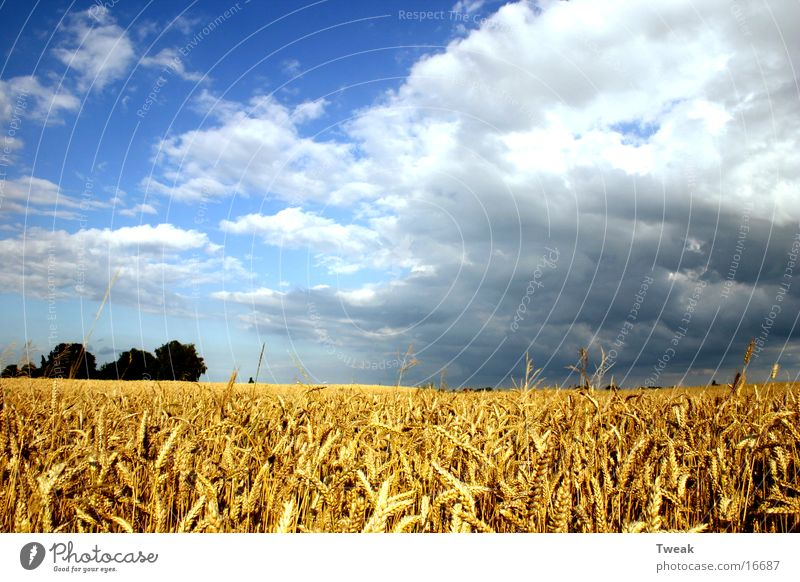 Field Americas Grain Blue sky Raincloud