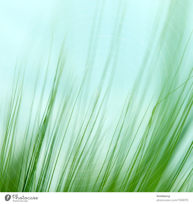 Nature Sky Green Plant Calm Life Relaxation Meadow Style Grass Park Contentment Field Macro (Extreme close-up) Design Environment