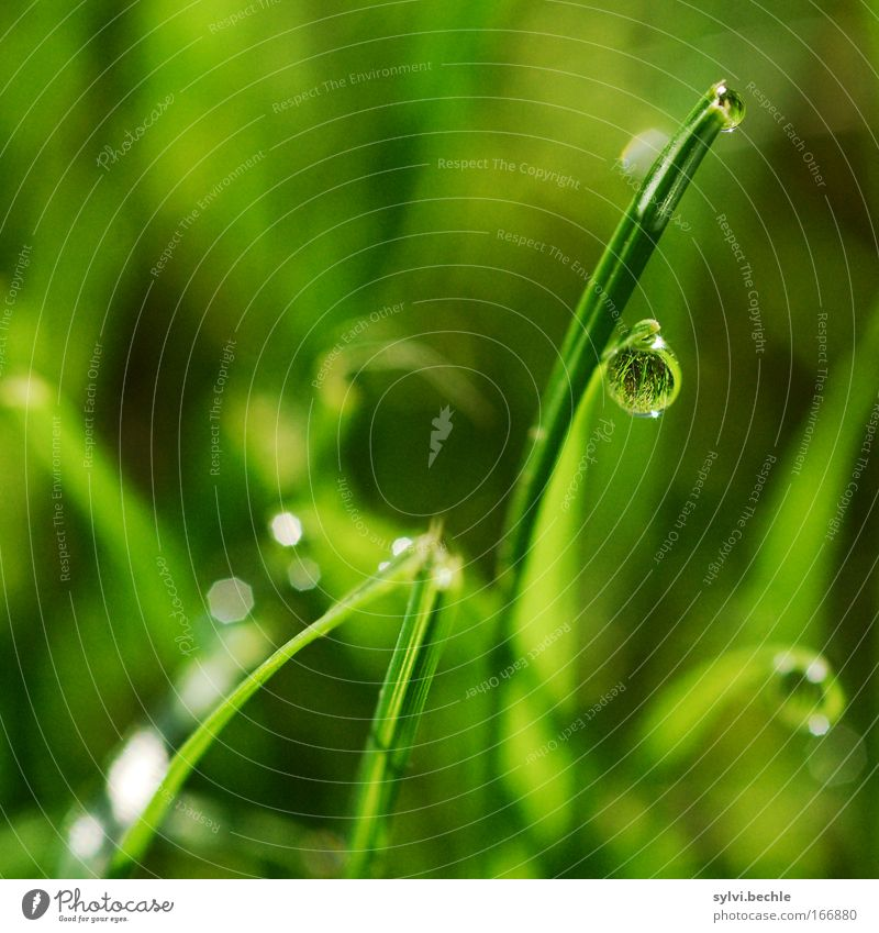 Nature Plant Green Water Loneliness Calm Life Meadow Grass Moody Rain Dream Glittering Copy Space Drops of water Climate