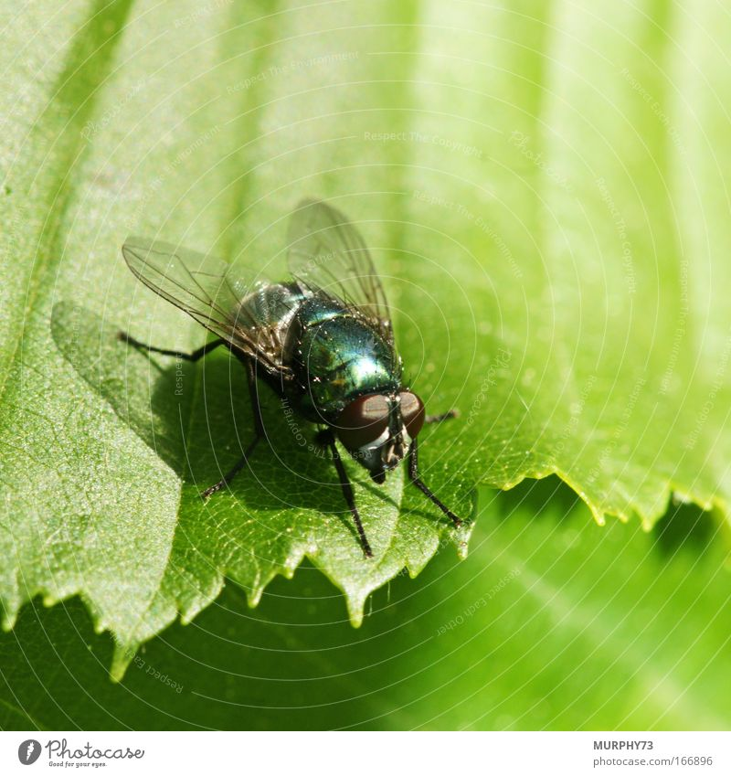 Nature Green Leaf Animal Glittering Fly Flying Esthetic Stand Bushes Animal face Wing Observe Fantastic Natural Creepy