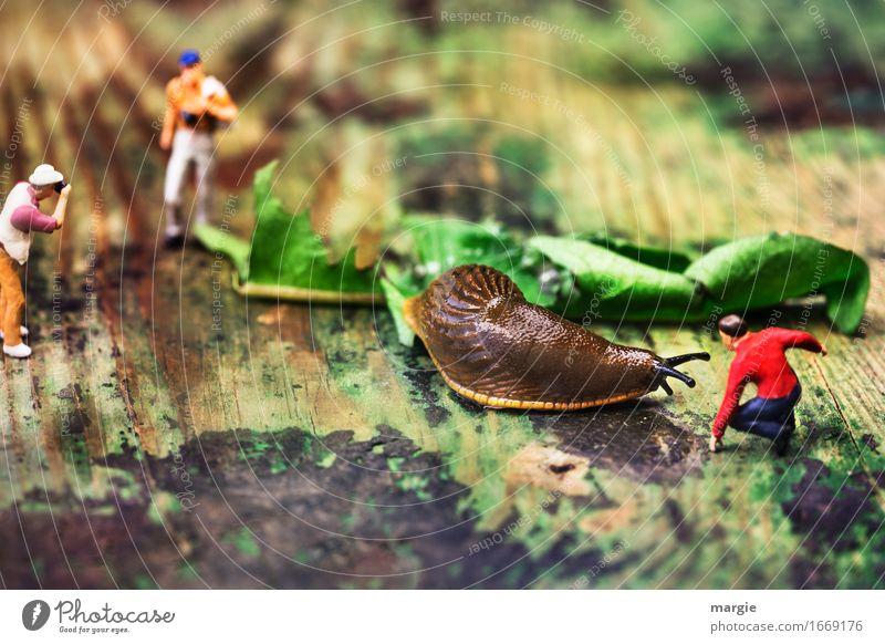 Miniwelten - Snails - Matador Meat Vacation & Travel Tourism Trip Adventure Safari Masculine Man Adults 3 Human being Leaf Zoo Brown Green Red Dandelion Fight