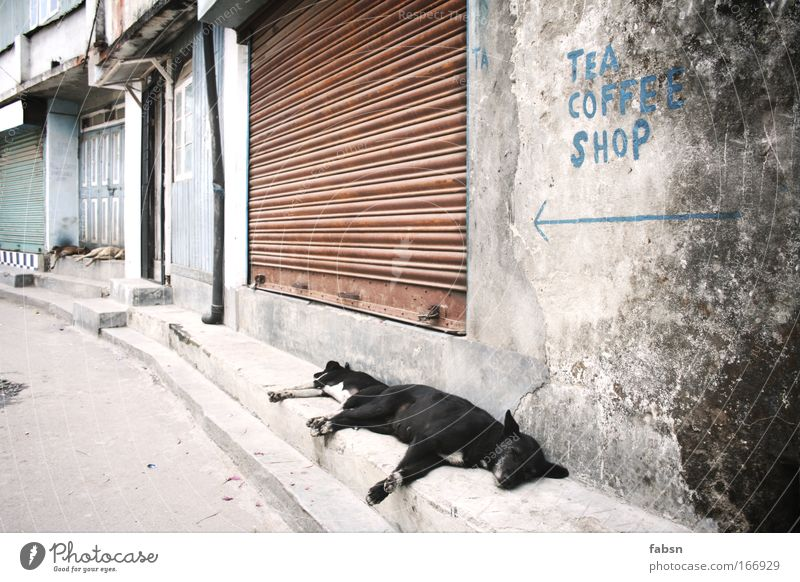 TEA COFFEE SHOP Colour photo Exterior shot Deserted Day Sunlight Shallow depth of field Central perspective Animal portrait Village Town Old town