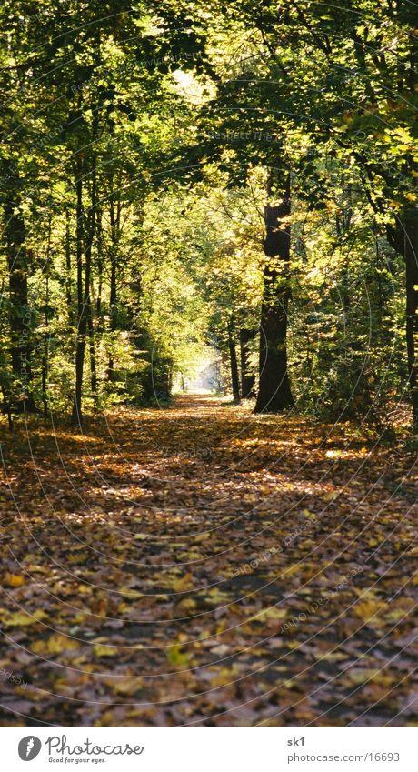 Leaf Forest Autumn Lanes & trails Clearing Karlsruhe Castle yard