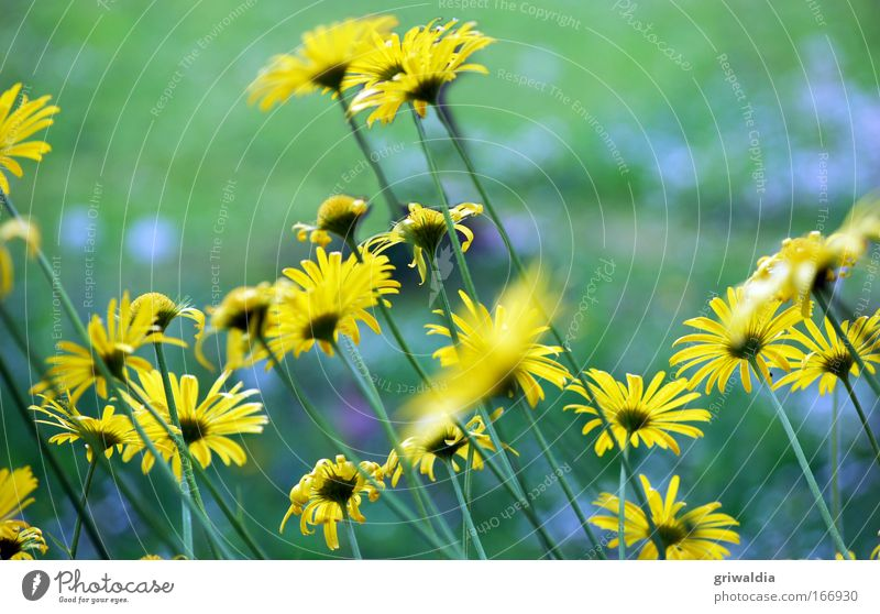 Nature Flower Green Plant Yellow Meadow Blossom Movement Spring Environment Perspective Growth Stand Blossoming Illuminate Fragrance