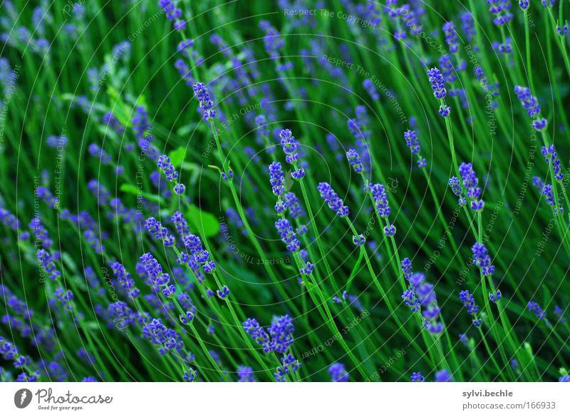 Nature Beautiful Green Blue Plant Summer Vacation & Travel Blossom Moody Field Environment Fresh Growth Long Idyll Blossoming