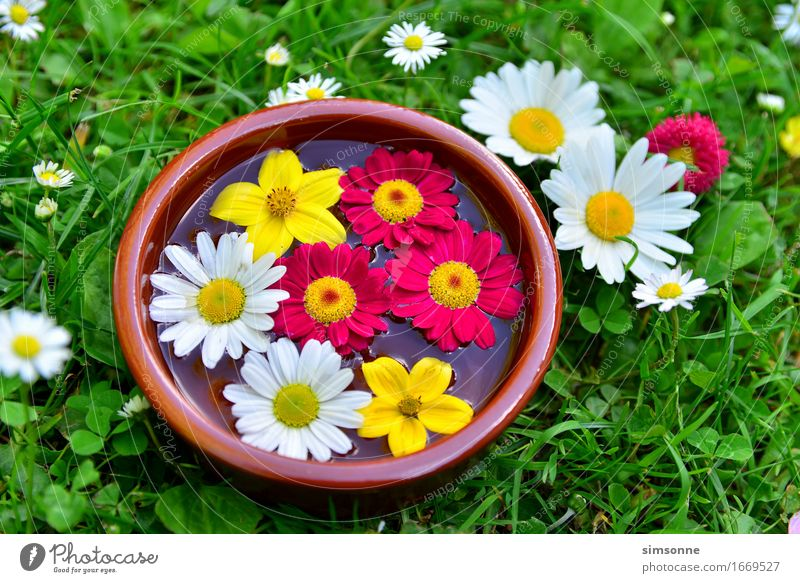 colorful flowers on a meadow in water bowl Happy Alternative medicine Wellness Spa Summer Sun Friendship Water Spring Grass Meadow Characters Bright Yellow