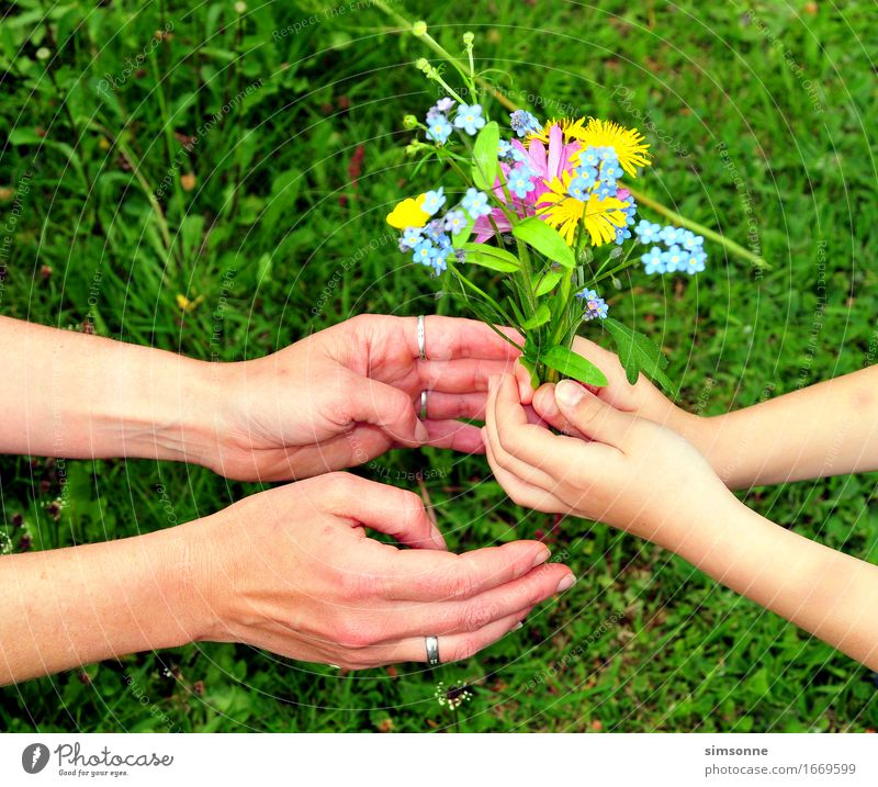 Hands give bouquet of flowers Happy Hair and hairstyles Face Reading Summer Sun Garden Mother's Day Child Girl Fingers Instant messaging Nature Plant Spring