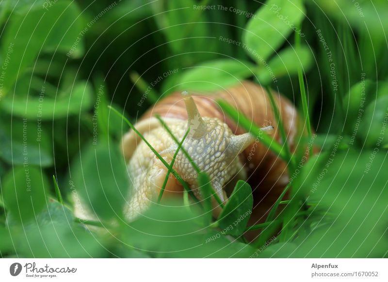 Nature Green Animal Environment Meadow Natural Grass Garden Park Observe Curiosity To feed Crawl Snail Cloverleaf