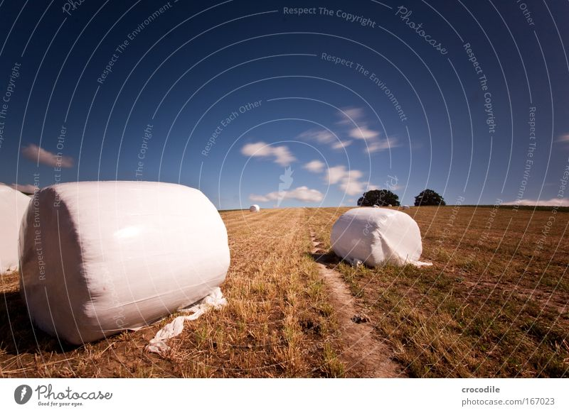 Marshmallow Field Colour photo Exterior shot Abstract Deserted Copy Space right Copy Space top Day Shadow Contrast Sunlight Long exposure Motion blur