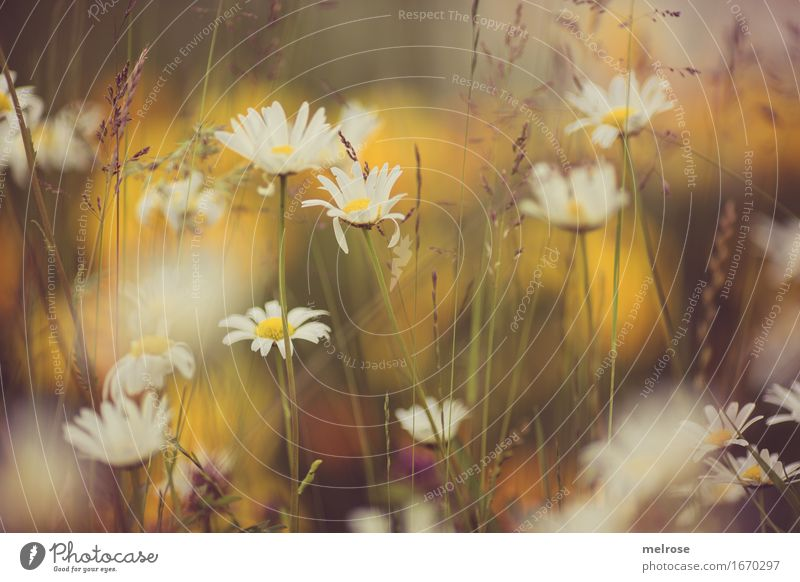 Nature City Plant Summer Beautiful Green Colour White Flower Relaxation Yellow Blossom Grass Moody Illuminate Happiness