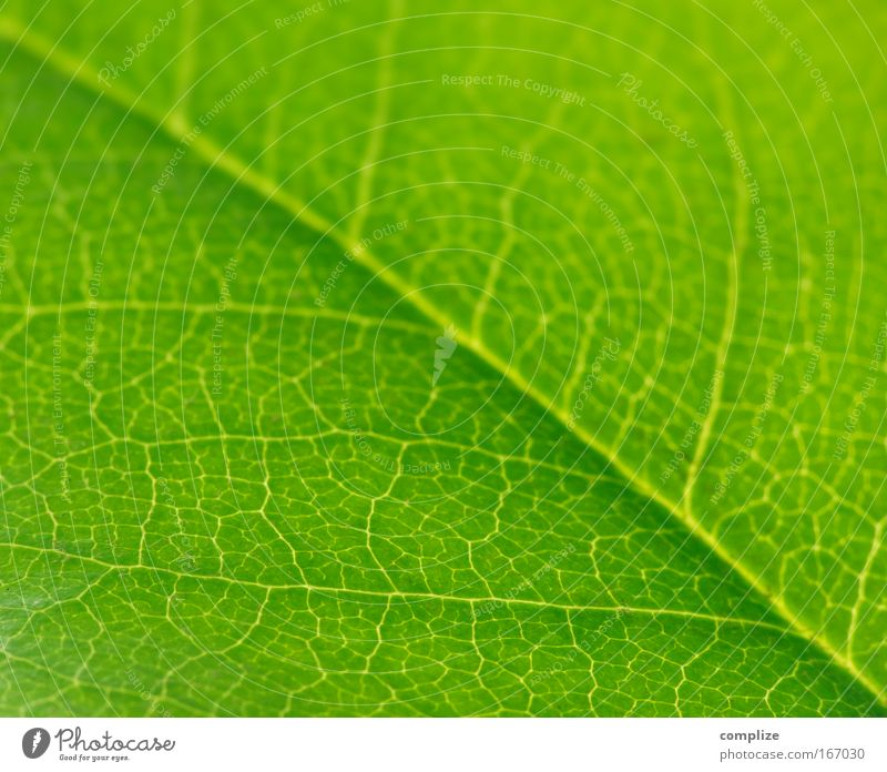 The Greens Colour photo Exterior shot Detail Macro (Extreme close-up) Structures and shapes Shadow Contrast Silhouette Sunlight Back-light Beautiful Summer