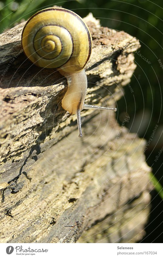 Is it going down there...? Colour photo Multicoloured Exterior shot Deserted Day Sunlight Animal portrait Wild animal Snail 1 Wood Curiosity Calm