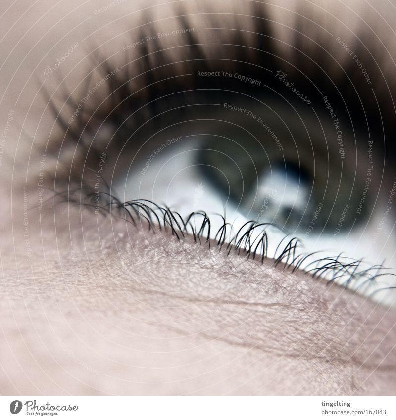blinking eyelashes Colour photo Subdued colour Detail Macro (Extreme close-up) Shallow depth of field Upward Feminine Eyes Think Looking Near Pupil Eyelash Skin