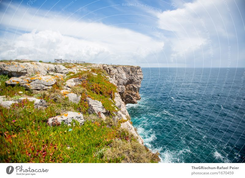 coastal meadow Environment Nature Landscape Water Sky Clouds Blue Brown Yellow Green Black Turquoise White Algarve Portugal Vacation & Travel Coast Cliff Flower