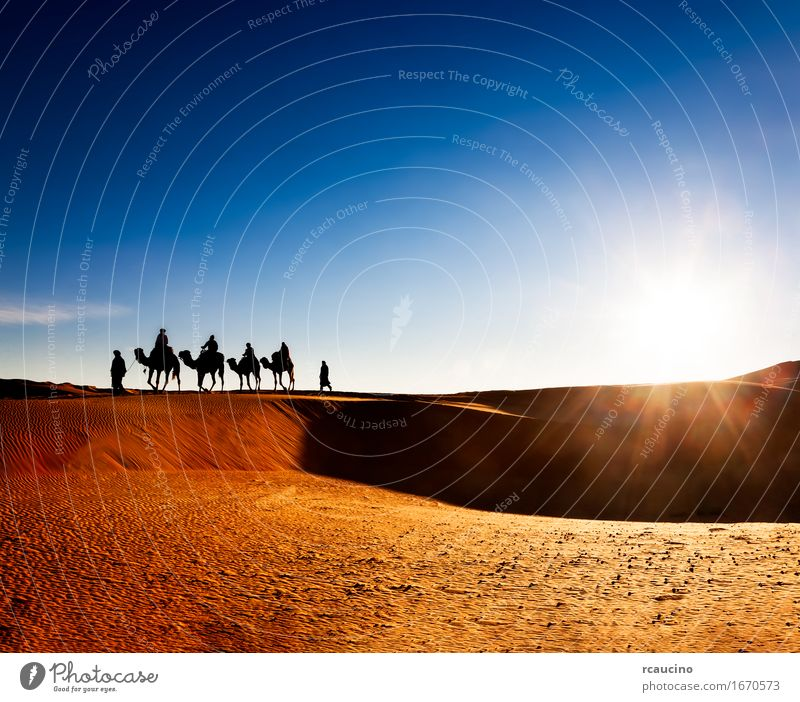 Exotic adventure: turist riding camels on sand dunes Human being Sky Nature Vacation & Travel Man Summer Beautiful Landscape Relaxation Red Adults Yellow Warmth Lanes & trails Sports Group