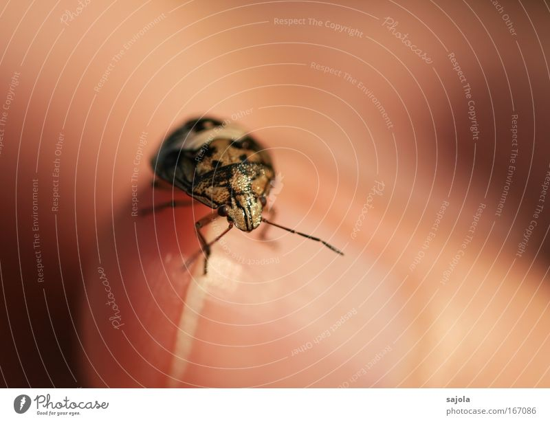 tingling tingling crawling Hand Fingers Fingernail Animal Beetle Animal face 1 Crouch Crawl Wait Small Near Cute Round Brown Pink Attentive Feeler Legs Shell