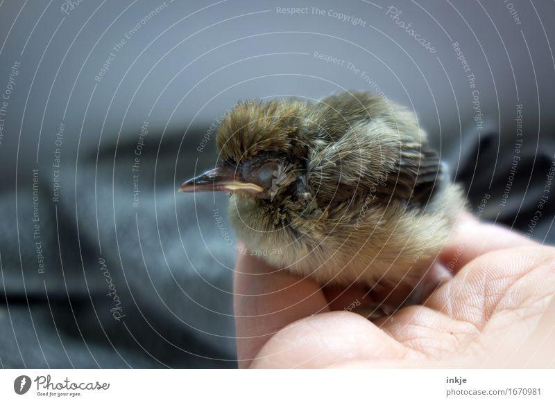 fall asleep Hand Wild animal Bird Young bird Blackbird 1 Animal Baby animal Crouch Sleep Small Cute Emotions Trust Protection Safety (feeling of)