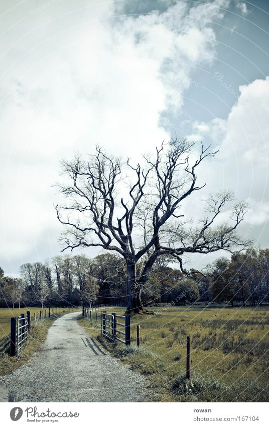scarecrow Colour photo Exterior shot Deserted Copy Space top Landscape Tree Field Threat Dark Creepy Gloomy Death Branchage Lanes & trails To go for a walk