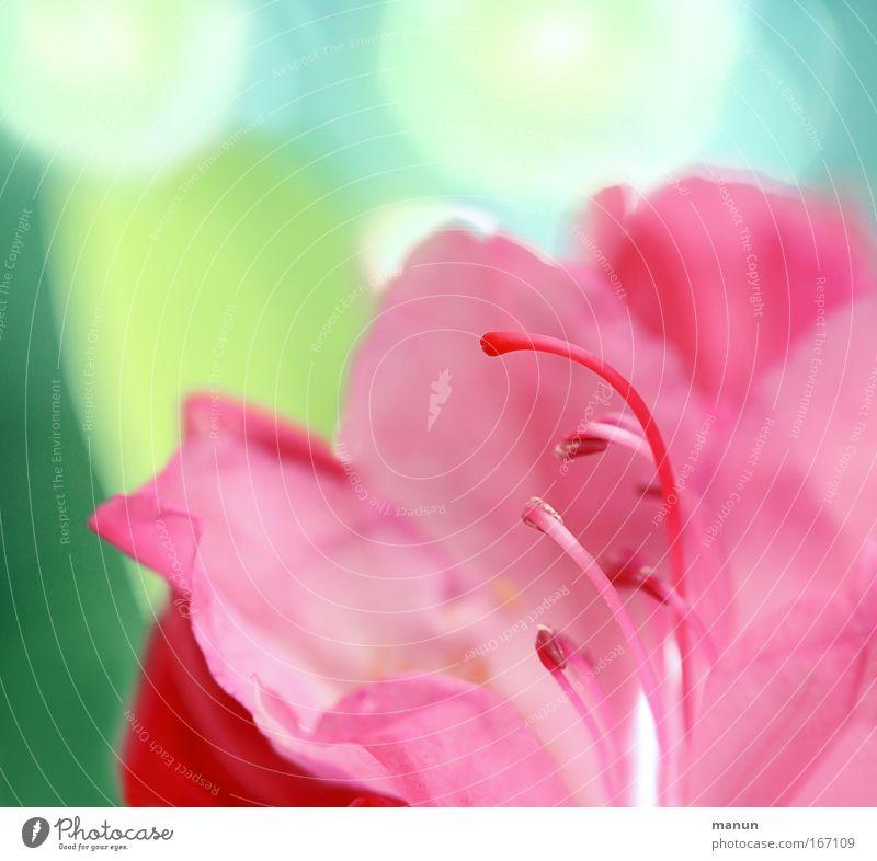 Beautiful Flower Plant Summer Style Blossom Spring Park Bright Art Pink Design Elegant Fresh Esthetic Exceptional