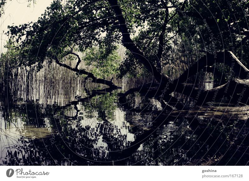 double world Colour photo Subdued colour Exterior shot Abstract Structures and shapes Deserted Day Contrast Reflection Deep depth of field Central perspective