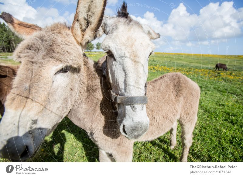 El Burro 1 Animal Farm animal 2 3 Blue Brown Gray Green Black Silver White Donkey Cuddling Family & Relations Together Couple Ear Cute Meadow Herd To feed