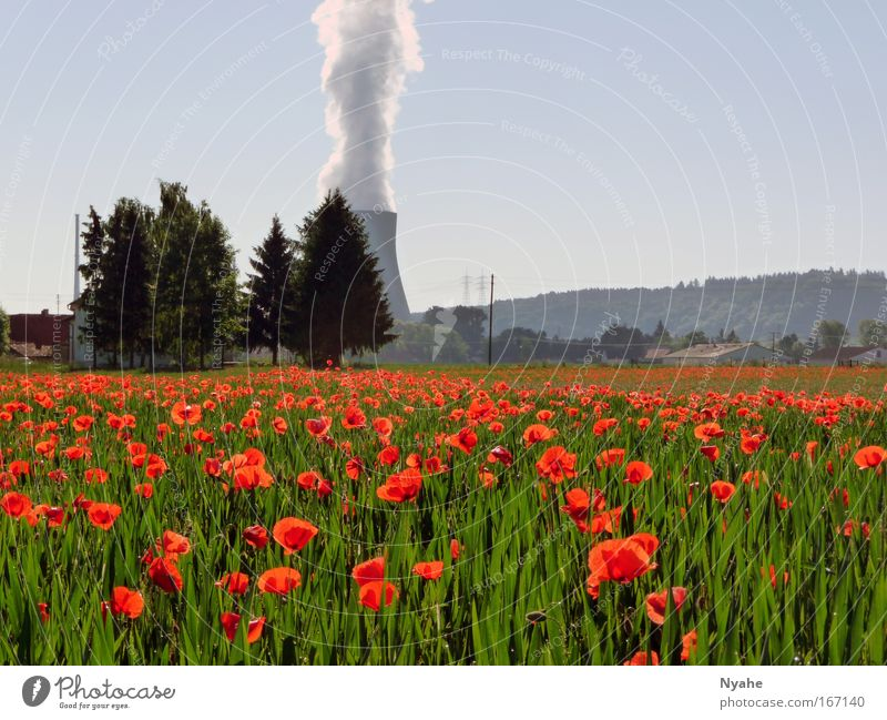Nature Sky Sun Flower Green Plant Red Summer Landscape Power Field Environment Large Poppy Energy industry Threat