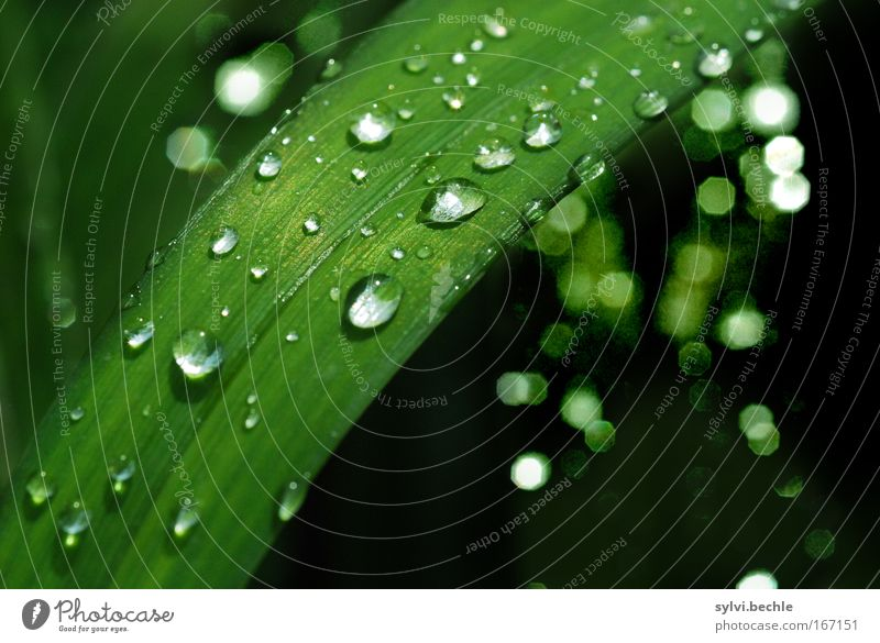 Nature Water Beautiful Green Plant Leaf Black Cold Grass Rain Glittering Weather Wet Drops of water Fresh Multiple