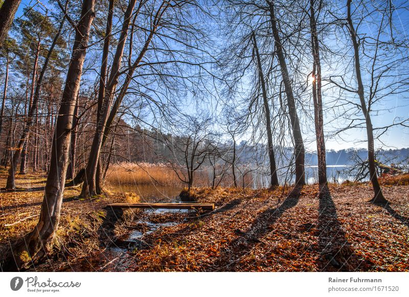 in the Brandenburg nature with back light Environment Nature Landscape Cloudless sky Sun Winter Weather Beautiful weather Tree Forest Calm Colour photo